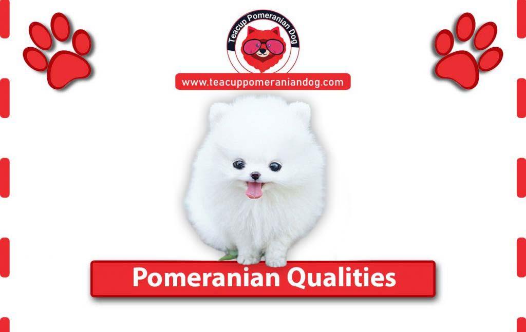 Pomeranian-Qualities1