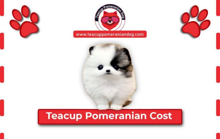 How Much Does Teacup Pomeranians Cost? – Average Price Range