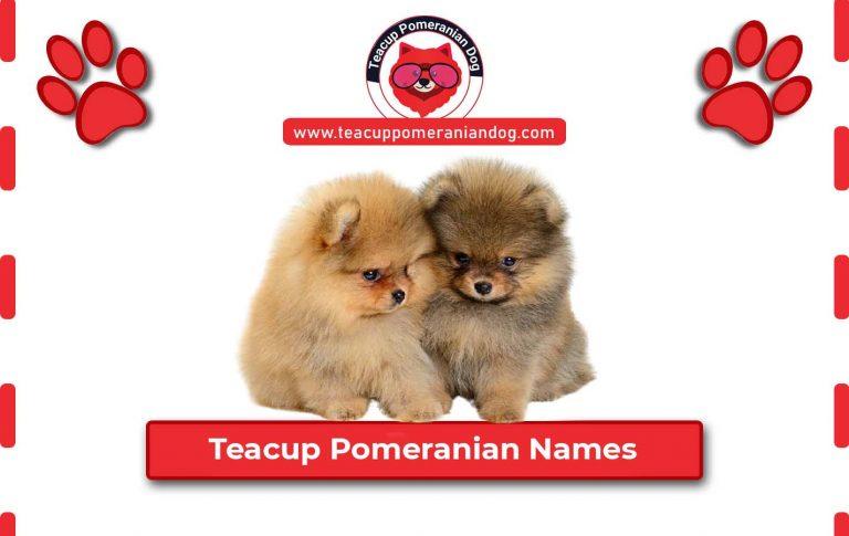 Furry and Fabulous Teacup Pomeranian Names