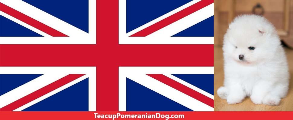 UK Teacup Pomeranian