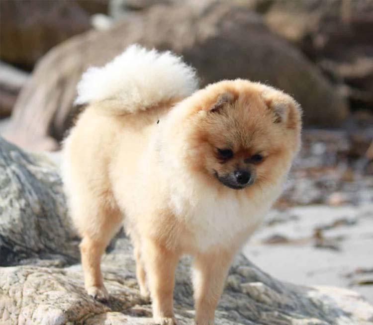 frizzy tail