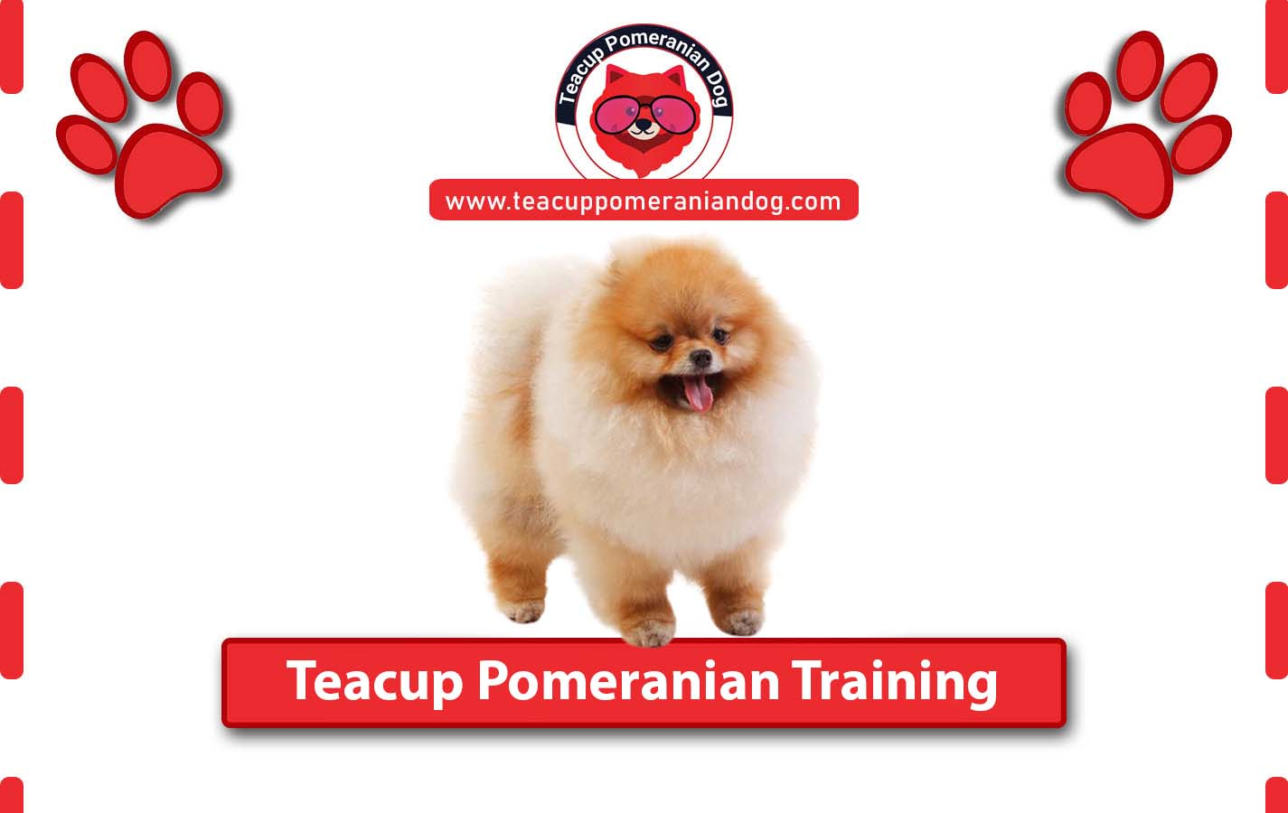 Teacup Pomeranian Training