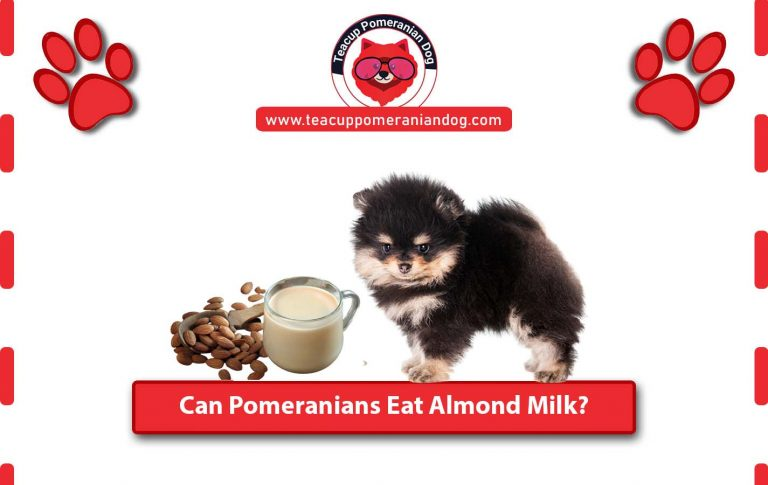 Can Pomeranians Eat Almond Milk? – Complete Guide