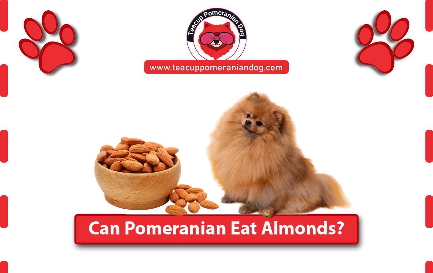 Can Pomeranian Eat Almonds