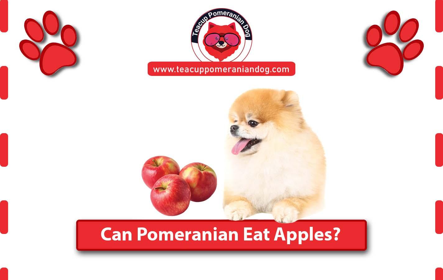 Can Pomeranian Eat Apples