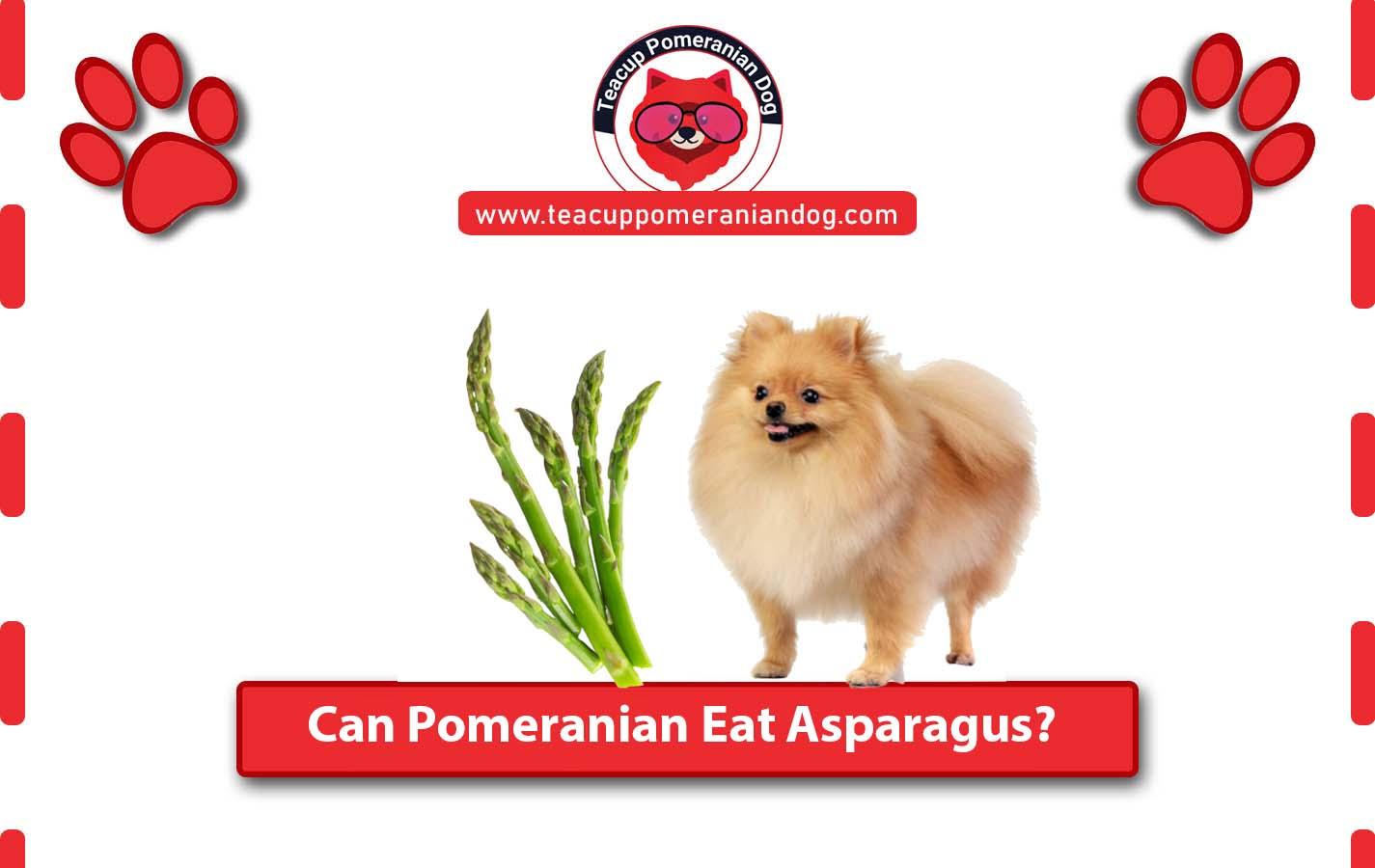 Can Pomeranian Eat Asparagus