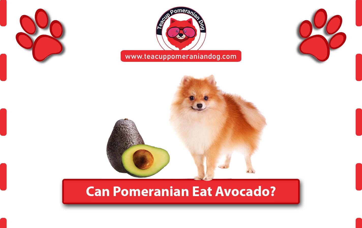Can Pomeranian Eat Avocado