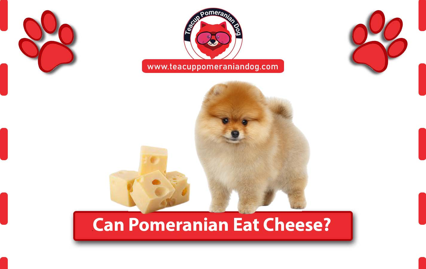 Can Pomeranian Eat Cheese