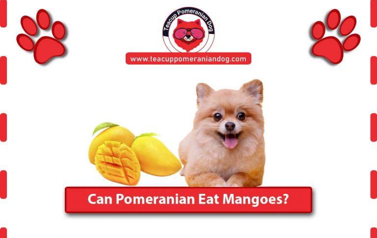 Can Pomeranian Eat Mangoes? Benefits and Hazards of Mangoes