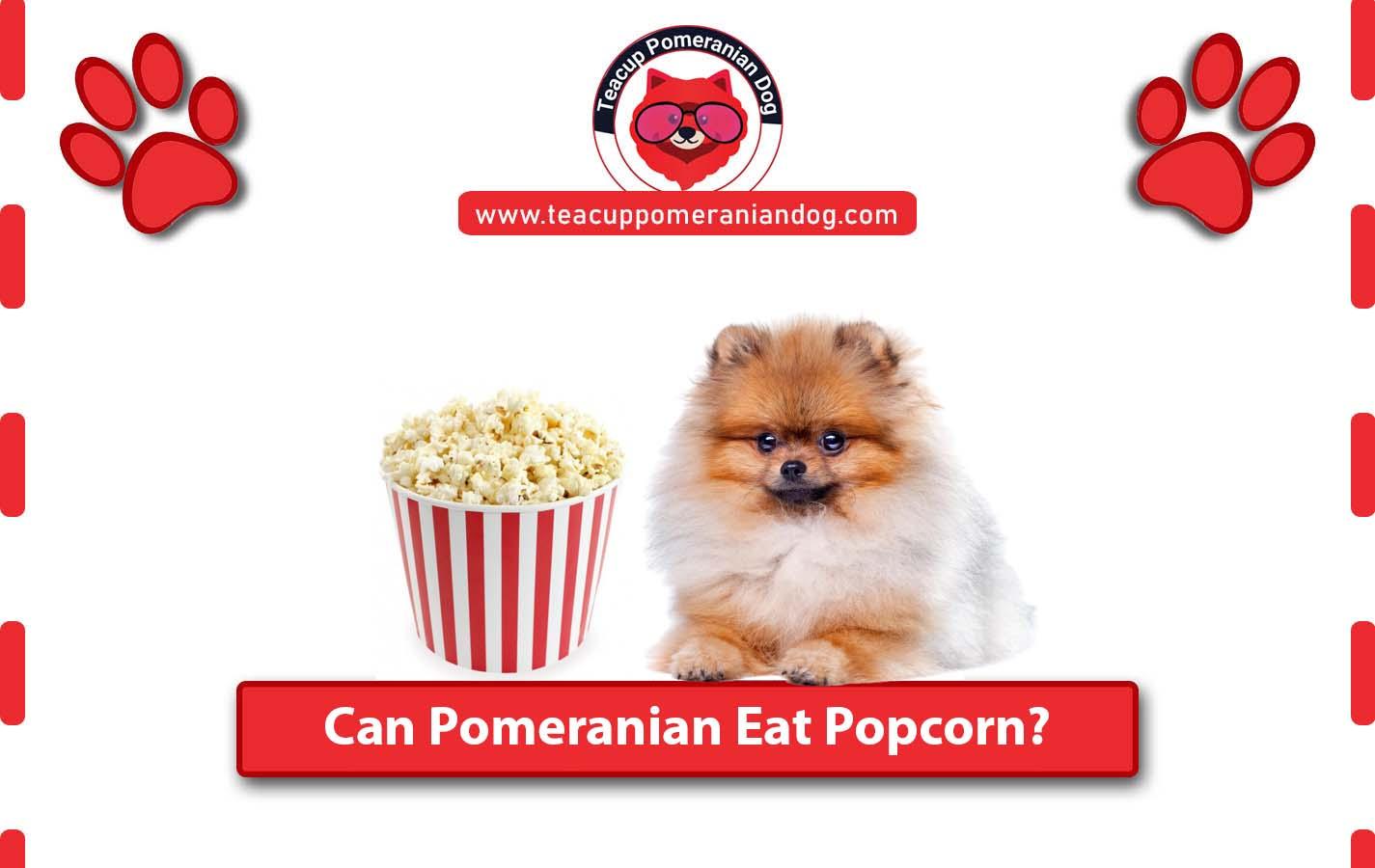 Can Pomeranian Eat Popcorn