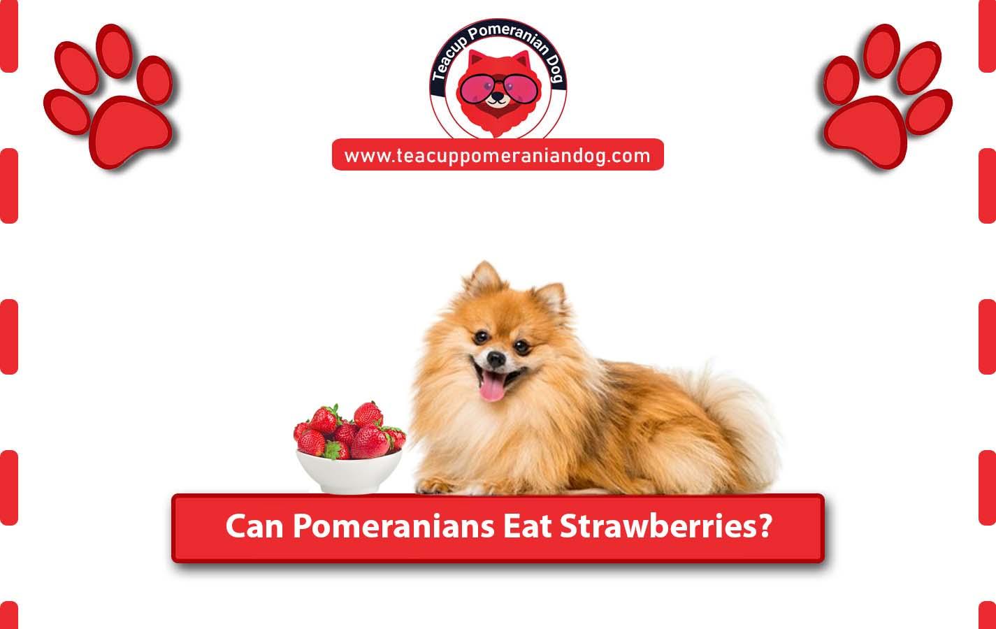 Can Pomeranian Eat Strawberies
