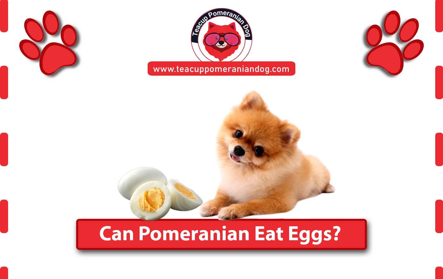 Can Pomeranian Eat eggs