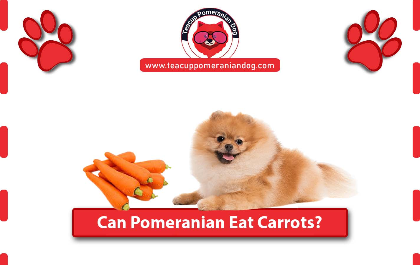 Can Pomeranian eat Carrots