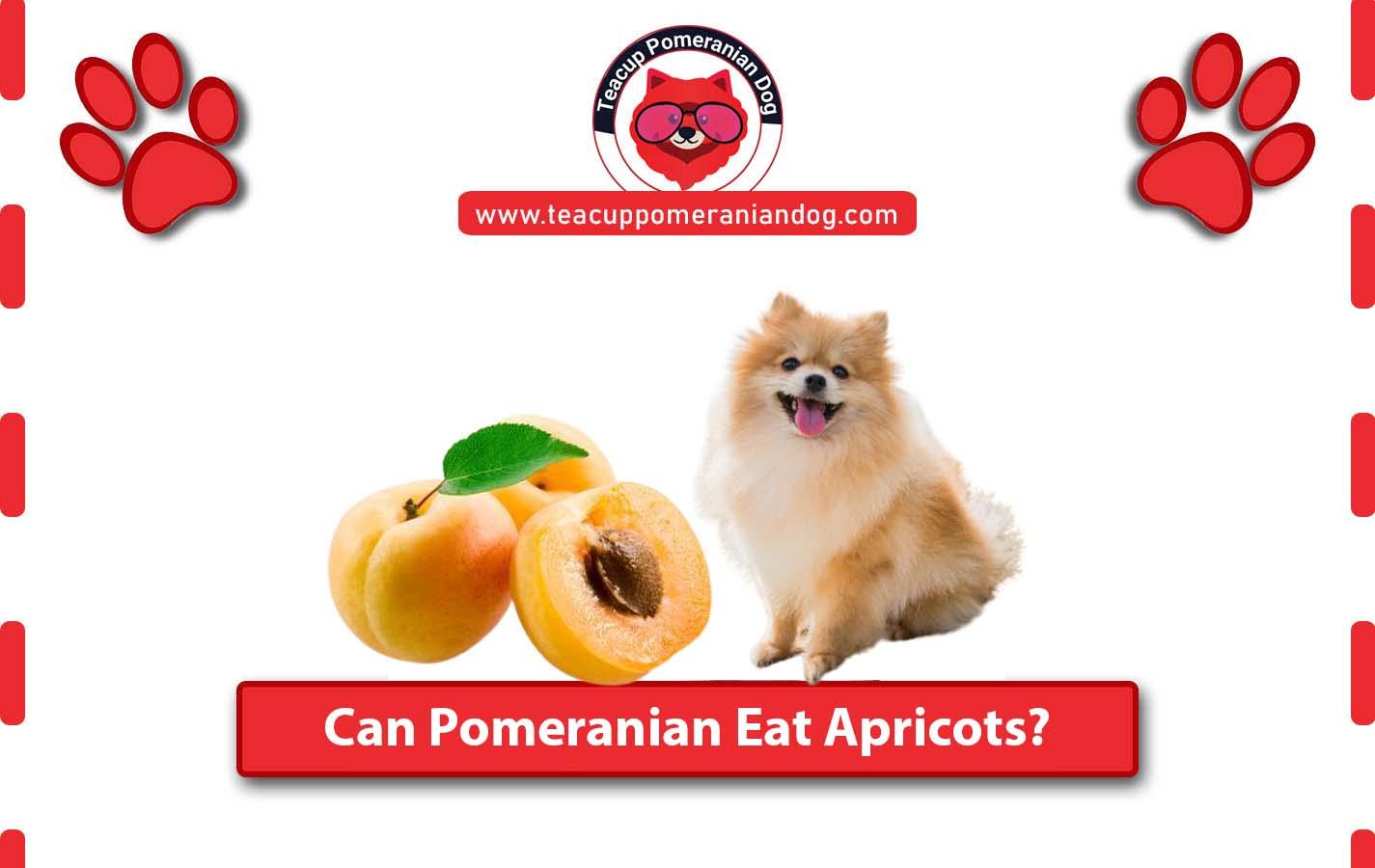 Can Pomeranian eat apricots2
