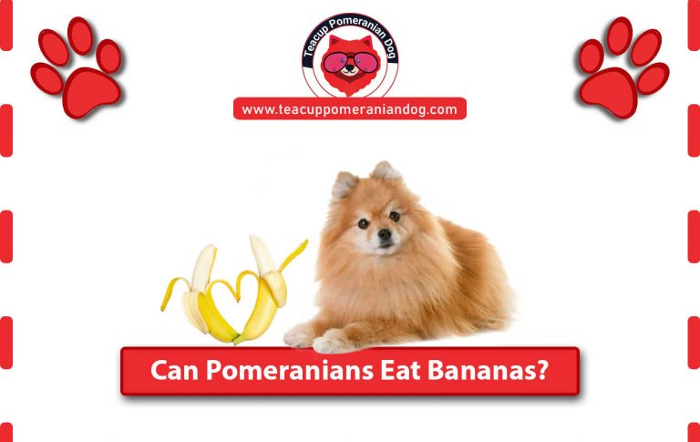 Can Pomeranians Eat Bananas? Is it safe for them – Complete Guide
