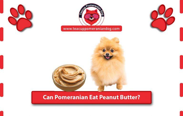 Can Pomeranian Eat Peanut Butter? Benefits of Peanut Butter