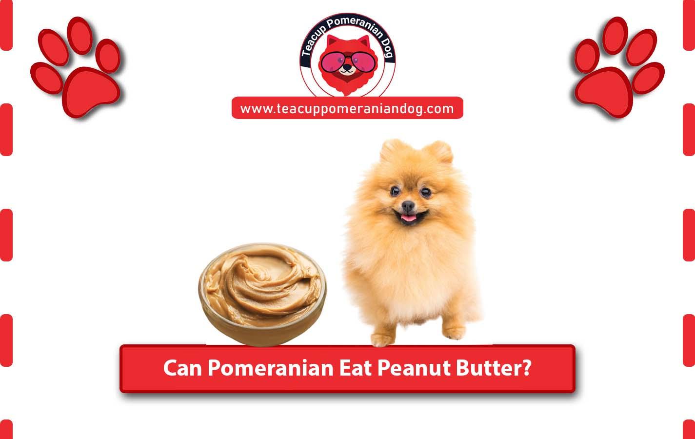 Can Pomeranian Eat Peanut Butter