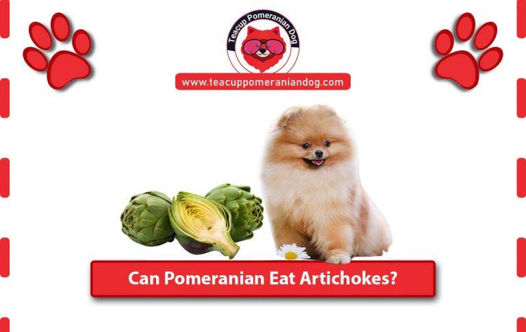 Can Pomeranian Eat Artichokes? Health Benefits of Artichokes