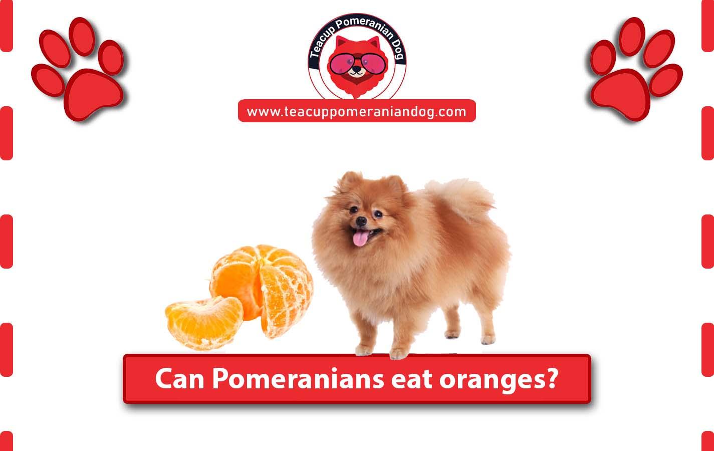 can Pomeranians eat oranges