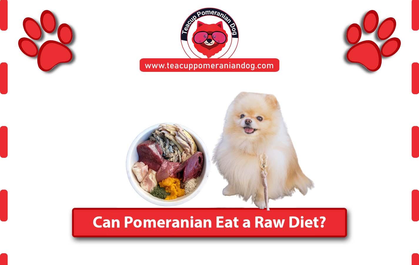 can a Pomeranian eat a raw diet