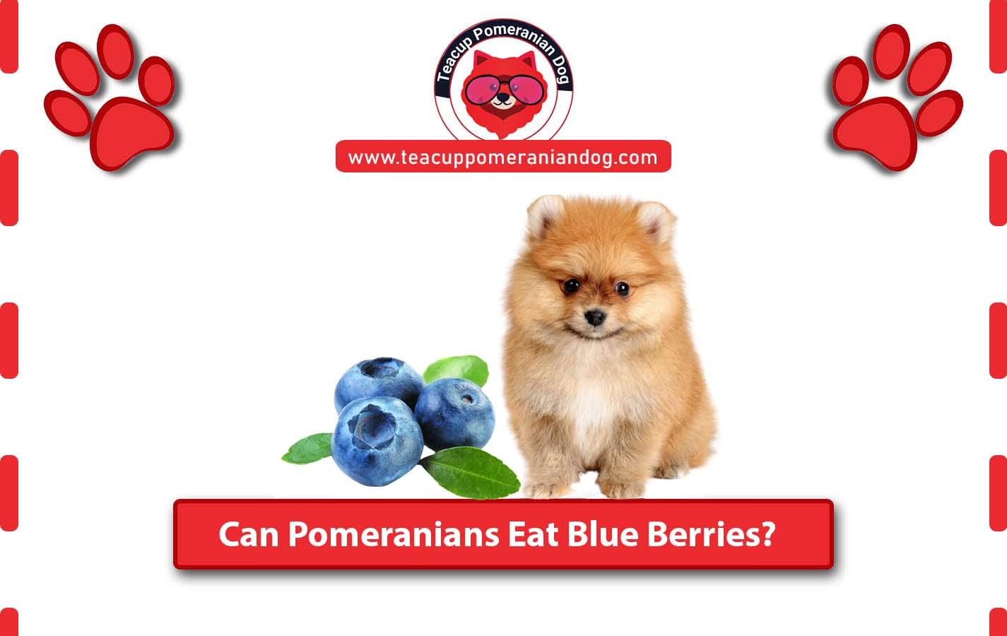 can pomeranian eat bullberrries.